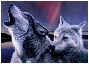 Vukovi - Page 4 K9-wolves-300x216