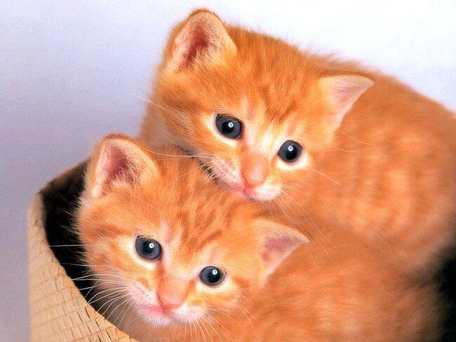 9 любопытных фактов о кошках 083367d78dfed68026edcc93e68bb8c0