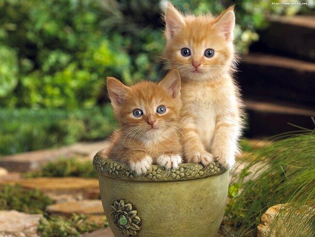 9 любопытных фактов о кошках 0b03af4268f8cb71dd391a44f5f14d6b