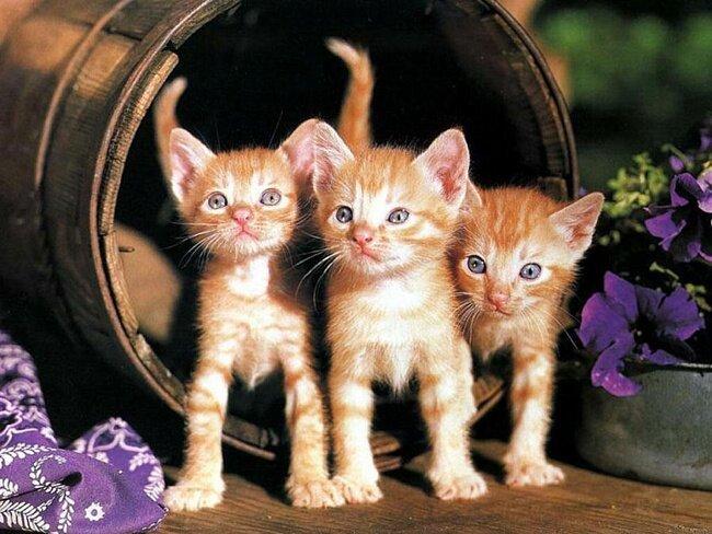 9 любопытных фактов о кошках 0b177f2883f8749370429a4cc7ee881f