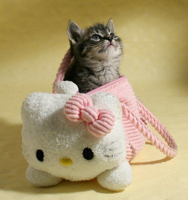 9 любопытных фактов о кошках 122450204933842853_1224230903_30935334_1219256342_kitty__kitty___by_hoschie