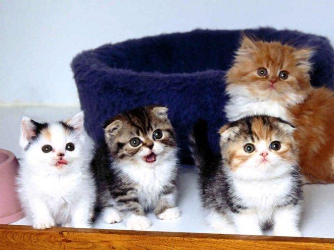 9 любопытных фактов о кошках 1265832349_image_0082