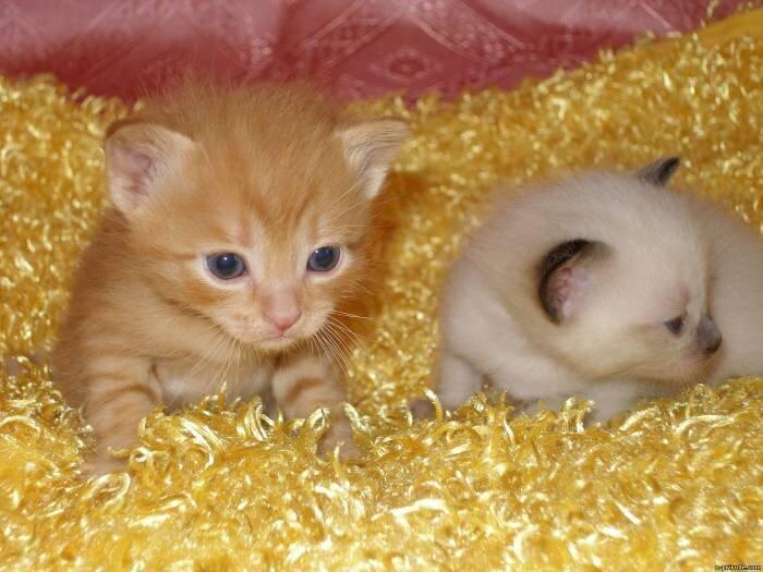 9 любопытных фактов о кошках 20120804183248