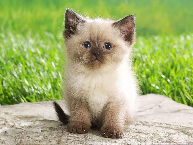 9 любопытных фактов о кошках AljK