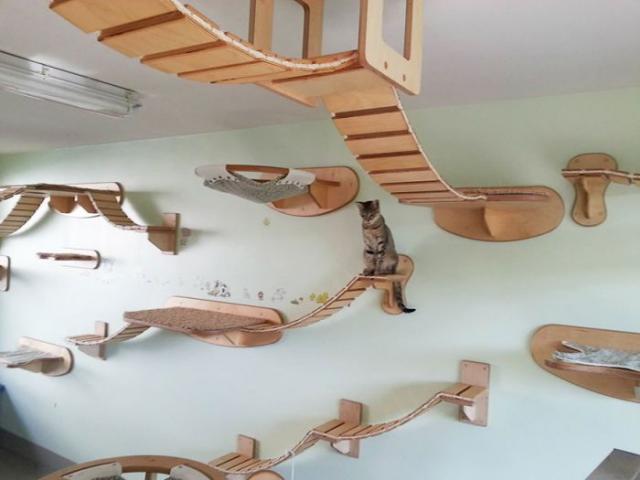 Райское место для кошечек! Cat_playground_room_01