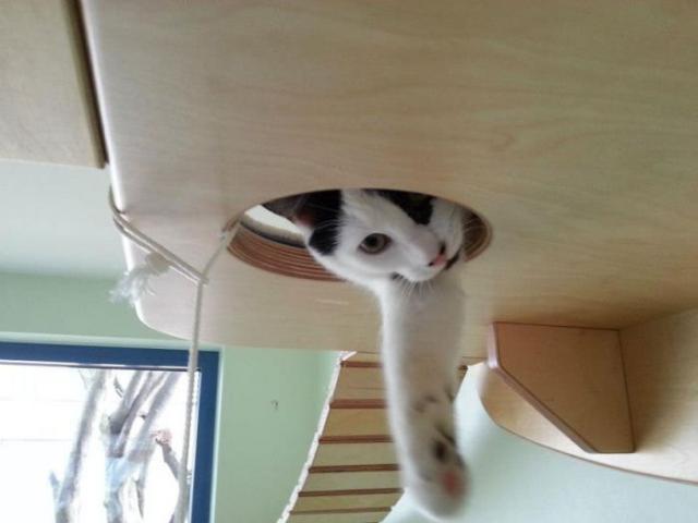 Райское место для кошечек! Cat_playground_room_02