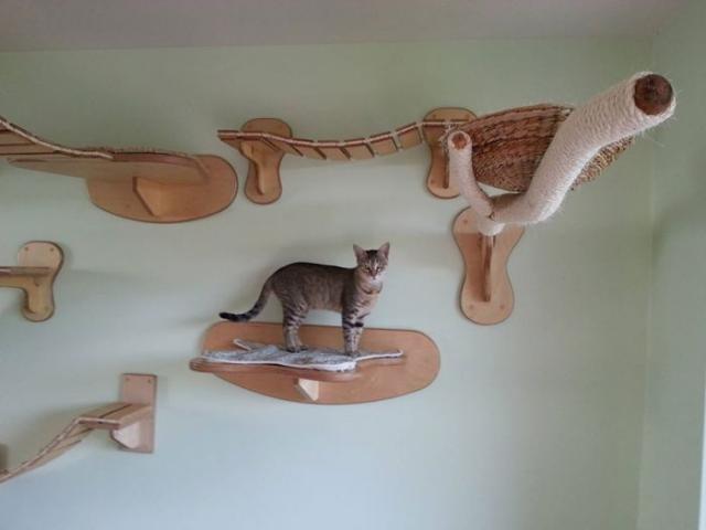 Райское место для кошечек! Cat_playground_room_05
