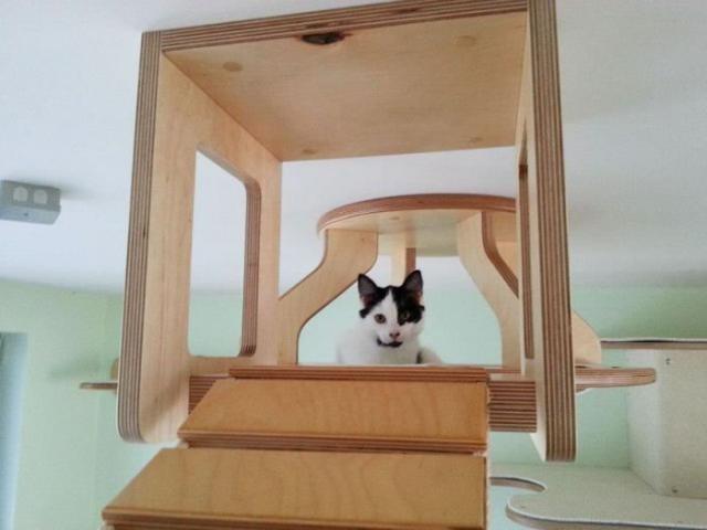 Райское место для кошечек! Cat_playground_room_06