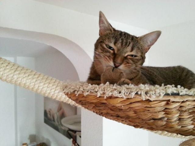 Райское место для кошечек! Cat_playground_room_08
