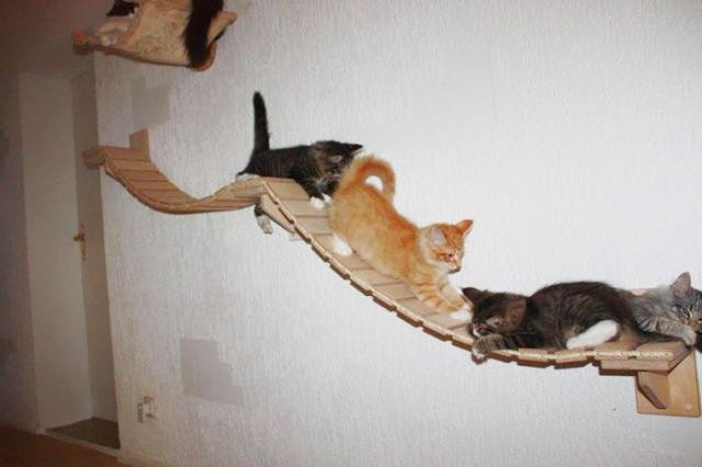 Райское место для кошечек! Cat_playground_room_09