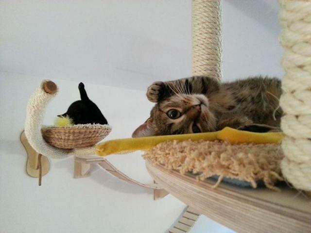 Райское место для кошечек! Cat_playground_room_10