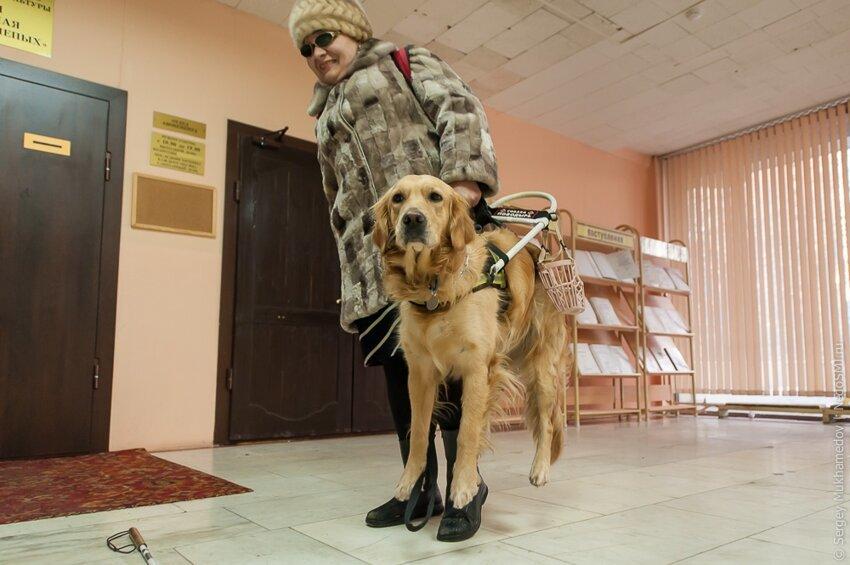 Золотые собаки Aeac36ff887cb88f8d33fc64a24be1e8