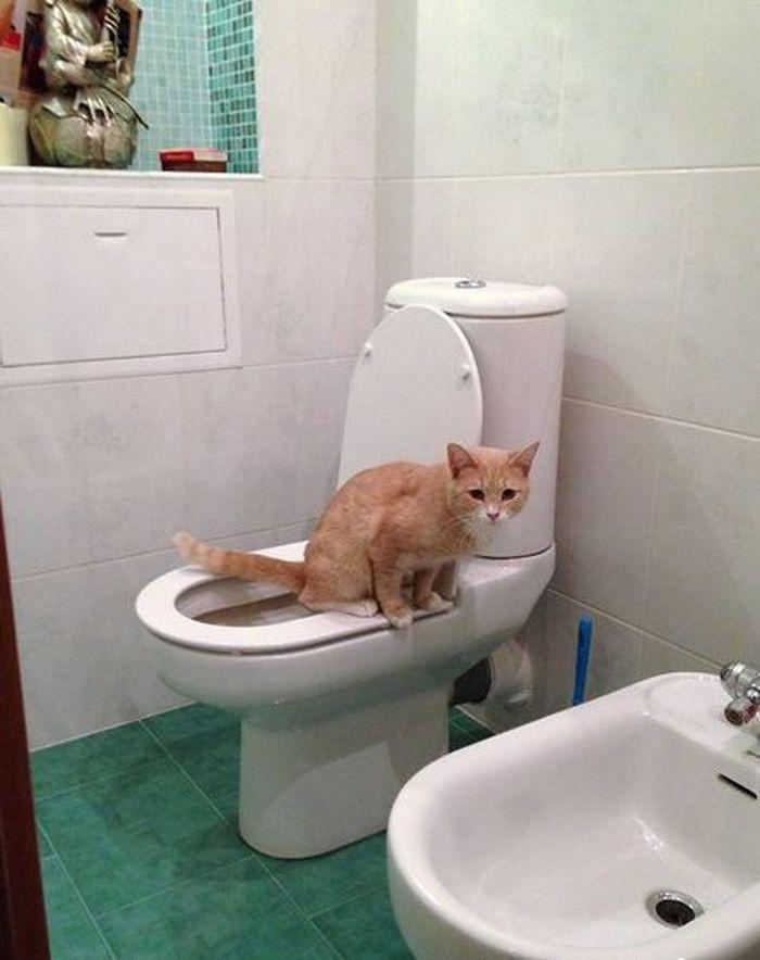 Приучение котейки к унитазу 4_015
