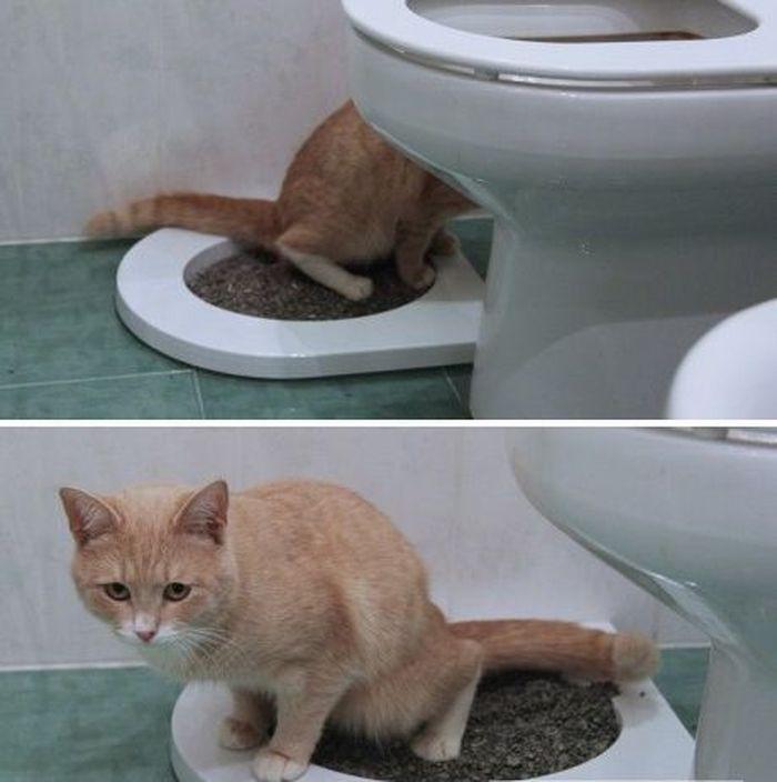 Приучение котейки к унитазу 5_005