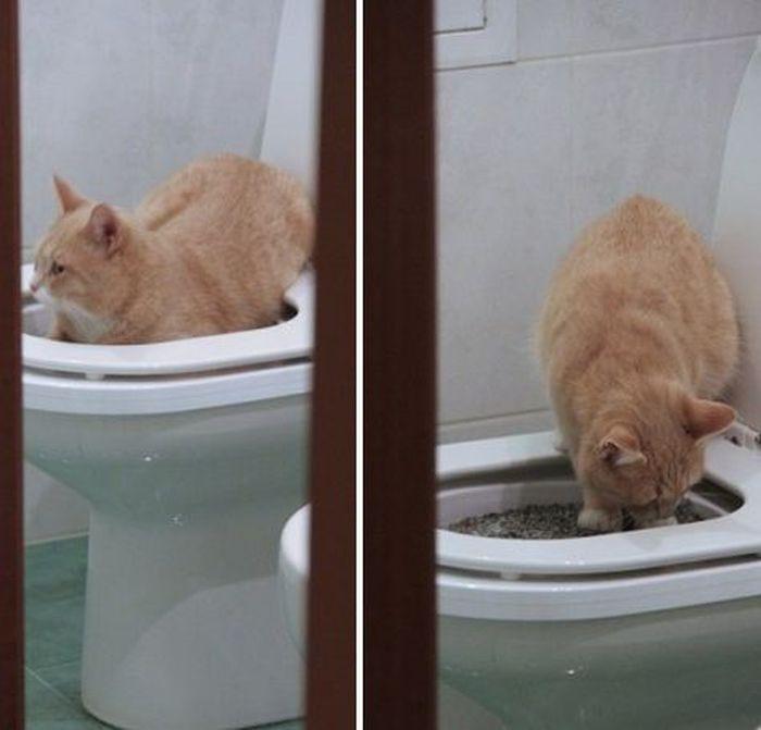 Приучение котейки к унитазу 5_007