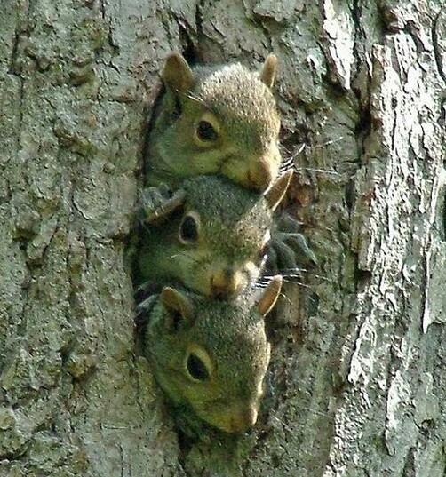 А вы знаете где живут белки? Squirrel_33