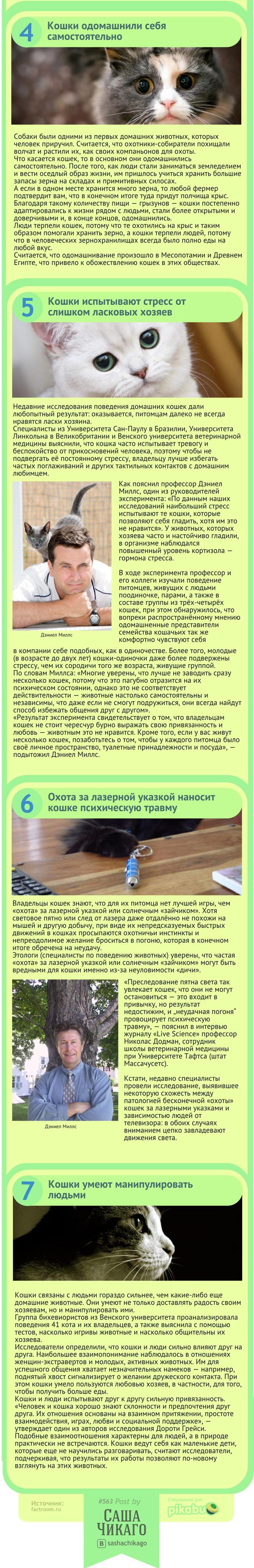 О взаимоотношения человека с кошкой 4_5