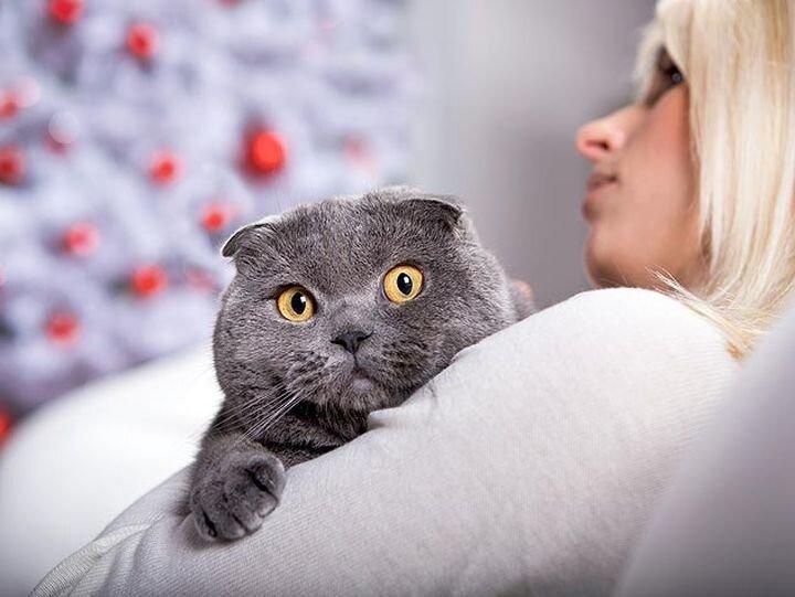 Что на самом деле означает поведение кошки 87229654
