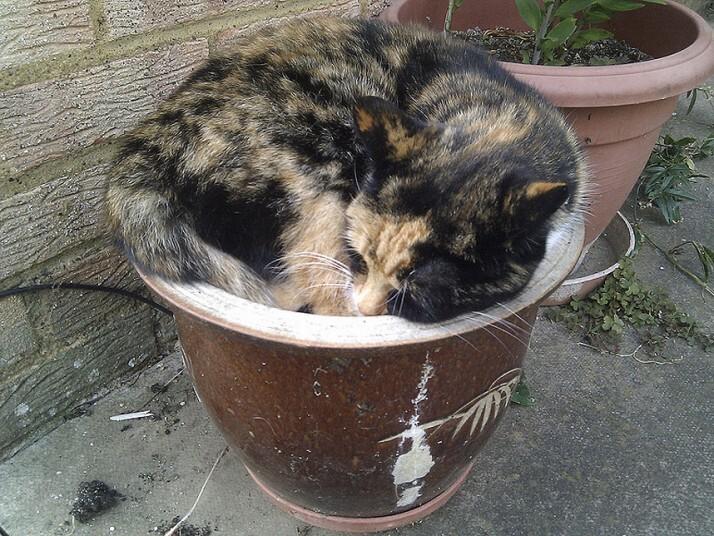 Mèo ngủ ở những nơi kỳ lạ 0473b02ce1c97d3e8735f17d64714193