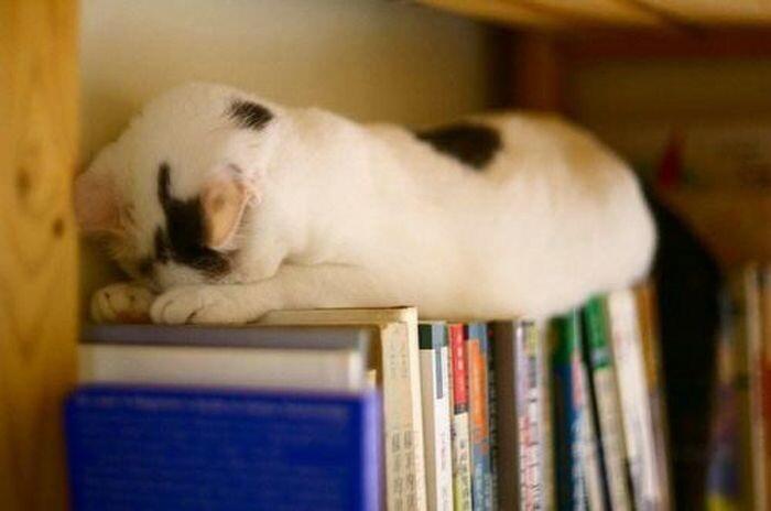 Mèo ngủ ở những nơi kỳ lạ 1328653580_cats-10