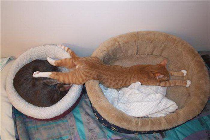 Mèo ngủ ở những nơi kỳ lạ 1328653585_cats-4