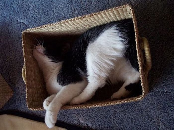 Mèo ngủ ở những nơi kỳ lạ 1328653600_cats-9
