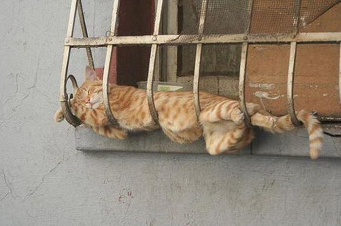 Mèo ngủ ở những nơi kỳ lạ 1328653658_cats-12