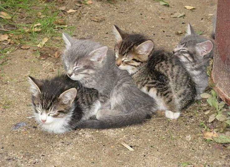 Mèo ngủ ở những nơi kỳ lạ 15ce69b11e0ed7bb9af6aafcf116b3da