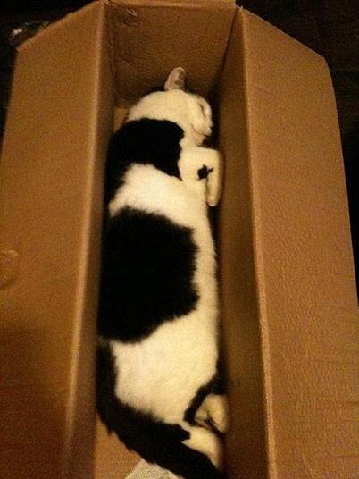 Mèo ngủ ở những nơi kỳ lạ 4ba8f319bdb6bdbb64352dc9c103c767