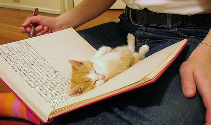 Mèo ngủ ở những nơi kỳ lạ 4e901ac04335fd83052658972ed7484b