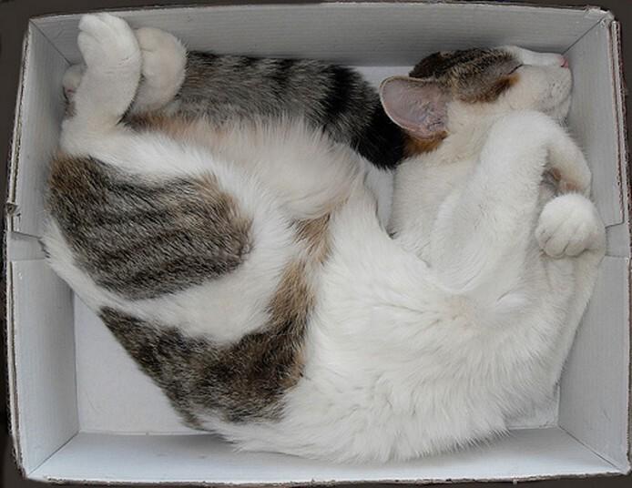 Mèo ngủ ở những nơi kỳ lạ 53c3738d63b5baac515b6b96a4d5048d