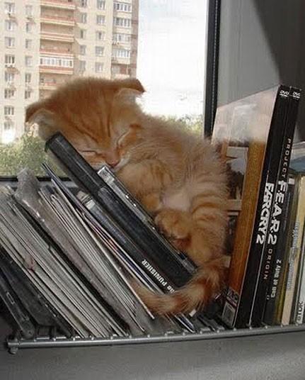 Mèo ngủ ở những nơi kỳ lạ 6ab8640f01cf3d269896e2c8d797acbd