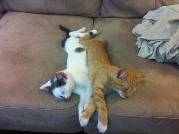 Mèo ngủ ở những nơi kỳ lạ 6bcf6a9fb215003b6a382c9f498e098a