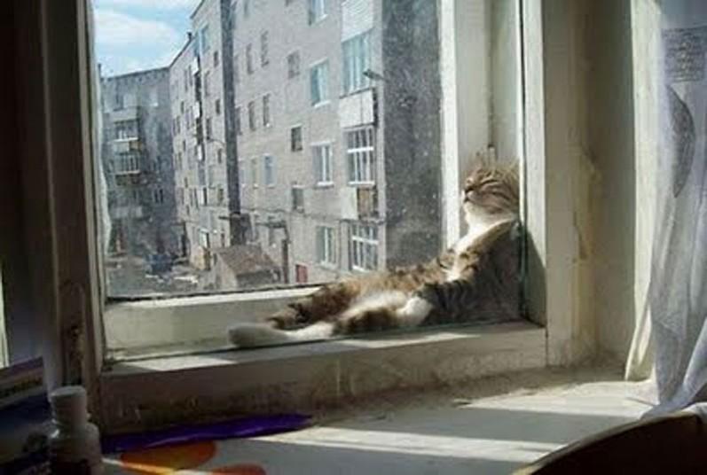 Mèo ngủ ở những nơi kỳ lạ 86726a4e2c22965511a3fca52cdf2847