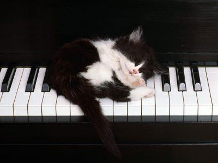 Mèo ngủ ở những nơi kỳ lạ 8eee5718896d858488794f3cca092d2d