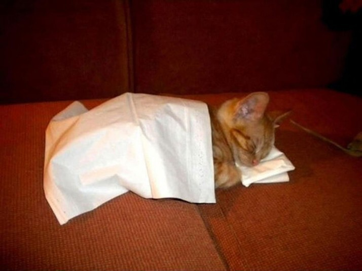 Mèo ngủ ở những nơi kỳ lạ A978ae1e96afe1e33fe8de3f38bba693