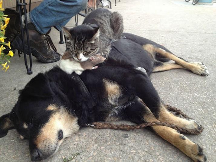 Mèo ngủ ở những nơi kỳ lạ Ad6d78495f7c78ceb454c38333d8a0ee