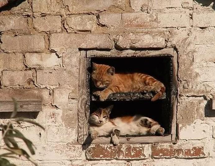 Mèo ngủ ở những nơi kỳ lạ Fc6b051325d0dfe0e0cd1b2877728363