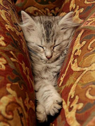 Mèo ngủ ở những nơi kỳ lạ Ffe8b4cab64fb28e89c5e2d5d1e6265c
