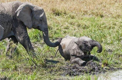 Интересные факты о животных 3381616_3ad05968