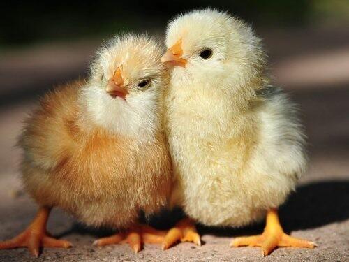 Интересные факты о животных 3381620_d1868b4f