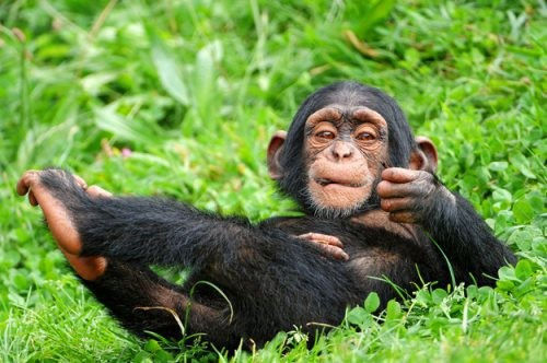 Интересные факты о животных 3381621_28219e00