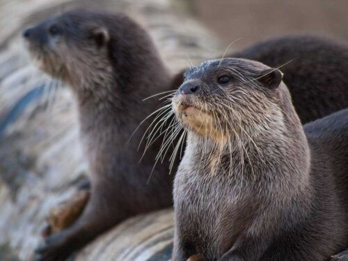 Интересные факты о животных 3381631_9f26400f