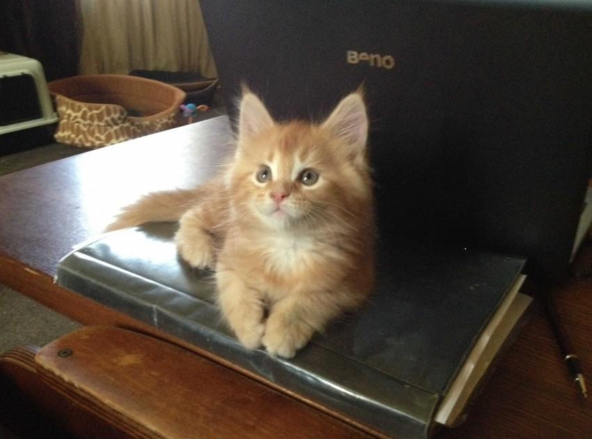Самодельный домик для кота 4d193e24854a5eee558c416c13c7ae13