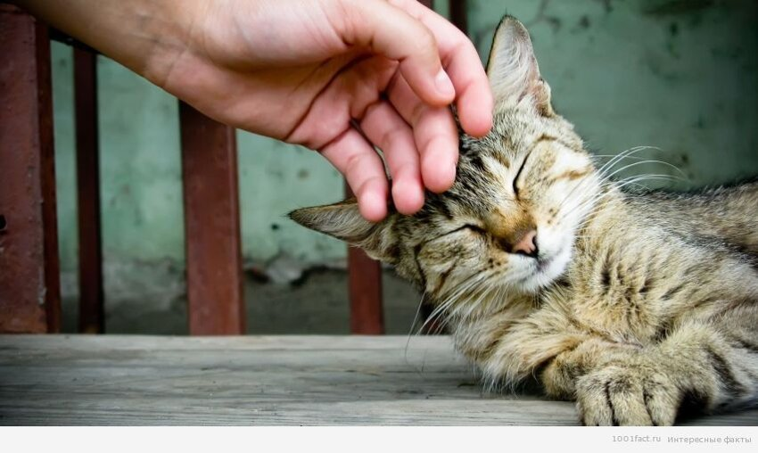 Зачем кошке усы? 10_koshka