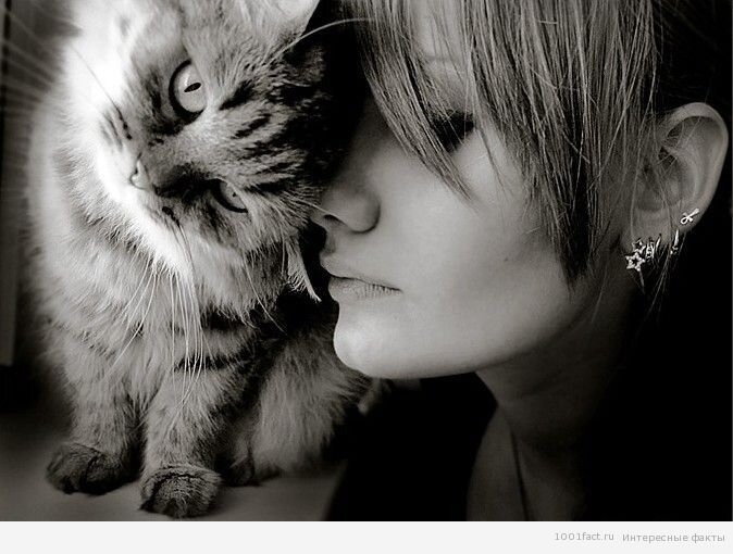 Зачем кошке усы? 11_koshka