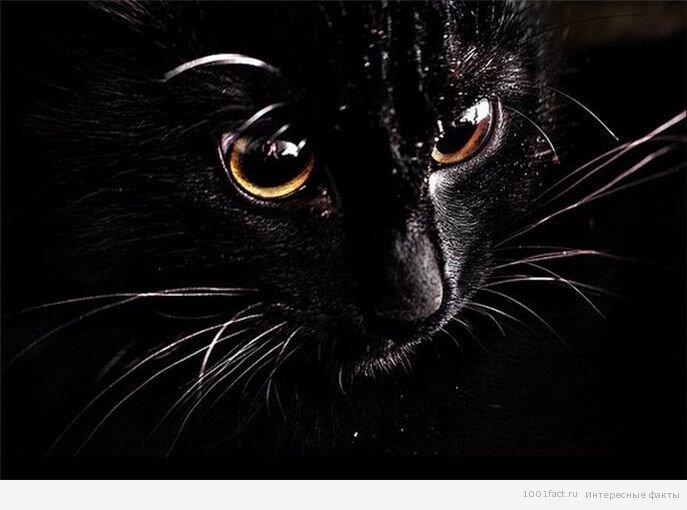 Зачем кошке усы? 1_koshka