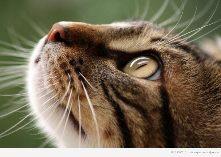 Зачем кошке усы? 2_koshka