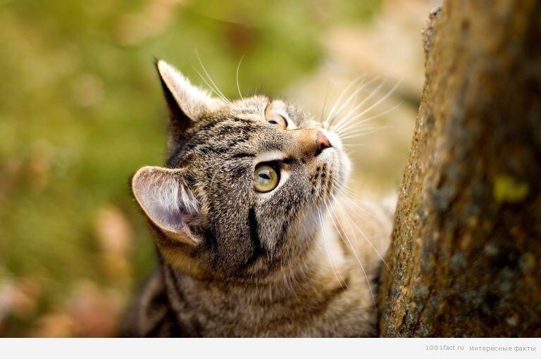 Зачем кошке усы? 3_koshka