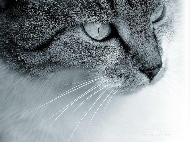 Зачем кошке усы? Koshka
